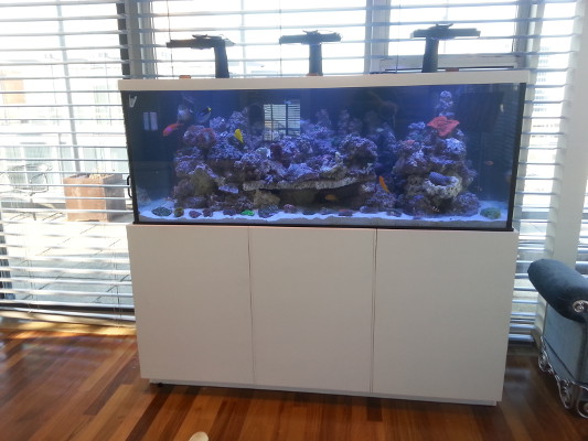 Image of custom made aquarium design by Living Art Aquatics Inc