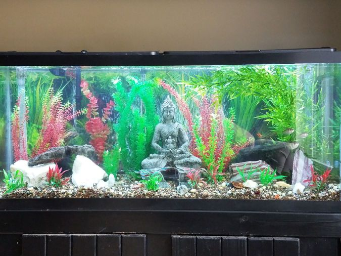 A statue sits inside an aquarium surrounded by plants and rocks