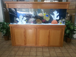 Image of a saltwater-aquarium by Living Art Aquatics