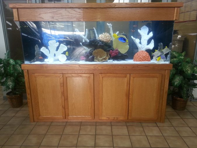 Image of a saltwater reef aquarium at a business