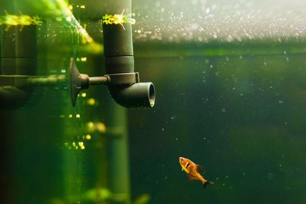 A picture of a fish swimming alongside a water filter, an important instrument used in aquarium maintenance.