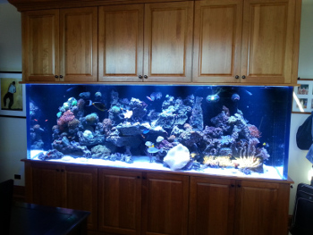 Tropical fish swimming in a custom aquarium