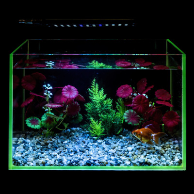 Photo of an aquarium with an LED light setup.