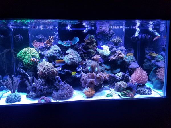 Picture of 120 gallon fish tank