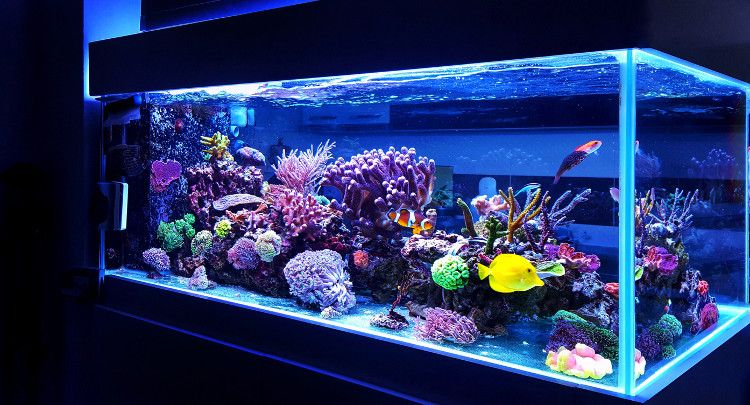 Image of colorful coral aquarium including fish.