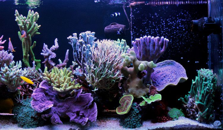 Image of colorful coral aquarium