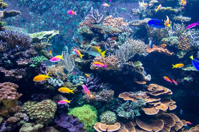 A vibrant aquarium filled with colorful fish.