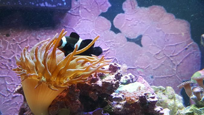 An image showing a fish swimming through plant life and coral in an aquarium.