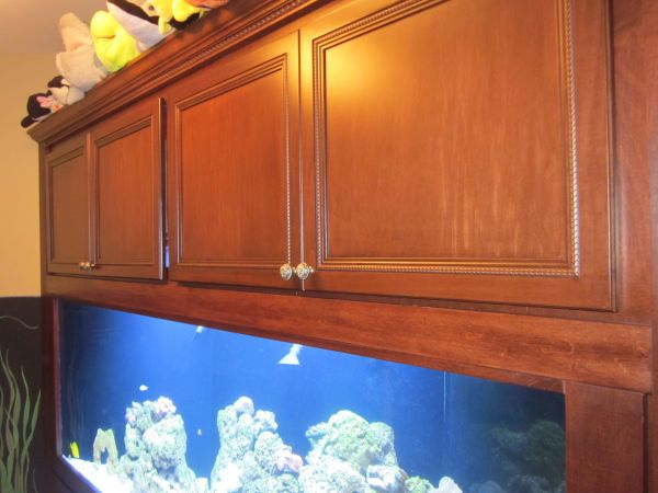 An image showing an aquarium with cabinets as a fish tank setup for beginners.